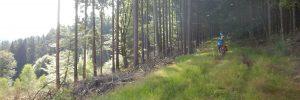 Mountainbiken an der Grenze Baden-Württembergs im Odenwald